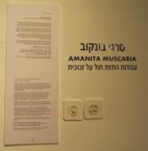 תערוכת זכוכית פסיכדלית של אמן הזכוכית סרגיי בונקוב בגלריה בתיאטרון חולון