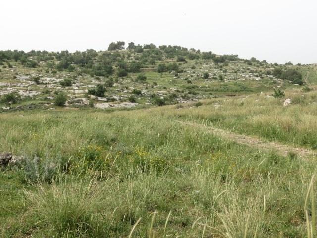 צילוםן דב גרינבלט