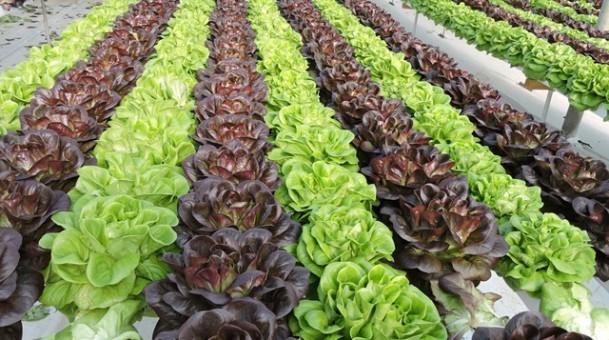 כרמל יבולים אוצר של טריות בריאות וטעמים