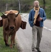 הפרה ז'קלין – סרט הקומדיה של הקיץ