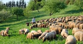 """""""הרועה"""" הסרט התיעודי ישודר בכאן 11"""